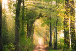 Фото бесплатно дорога, природа, солнечные лучи