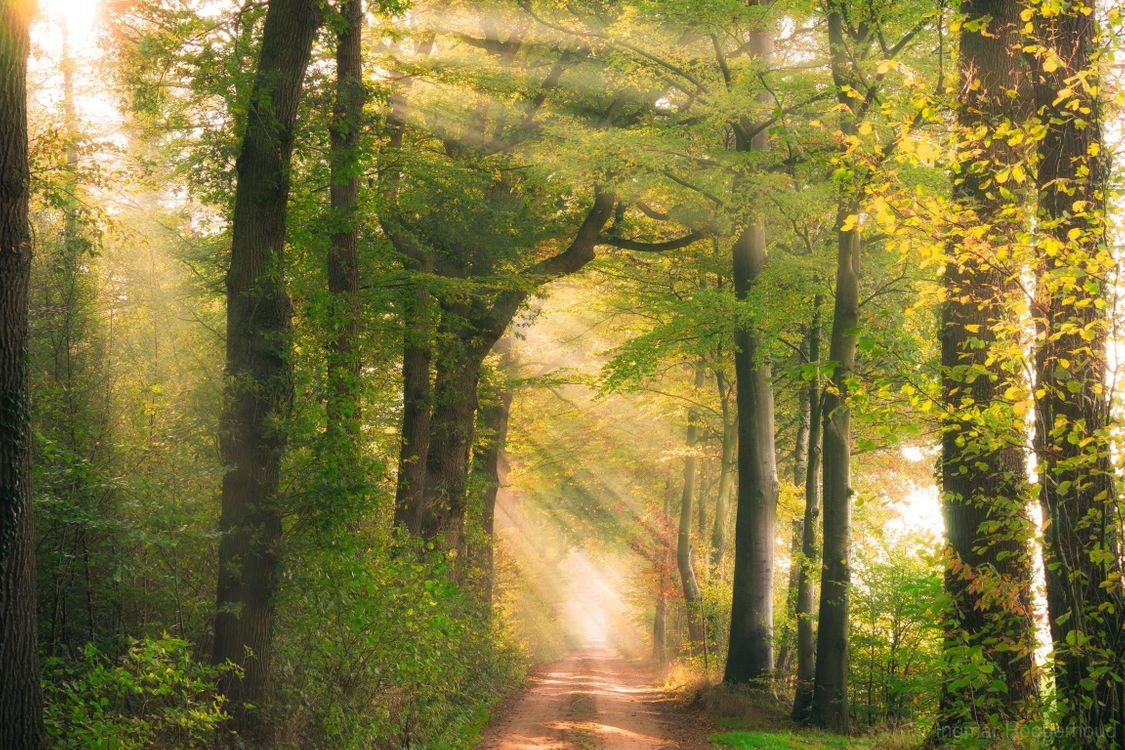 Фото бесплатно осень, лес, дорога, солнечные лучи, деревья, природа, пейзаж, пейзажи