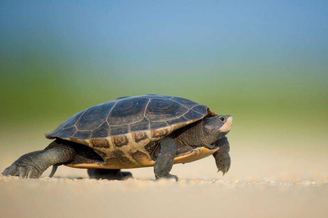 Обои гулять пешком, дикая природа, черепаха картинки на телефон