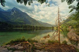 Бесплатные фото Hintersee,озеро,старое дерево,мертвое дерево,стебель,ветки,облака