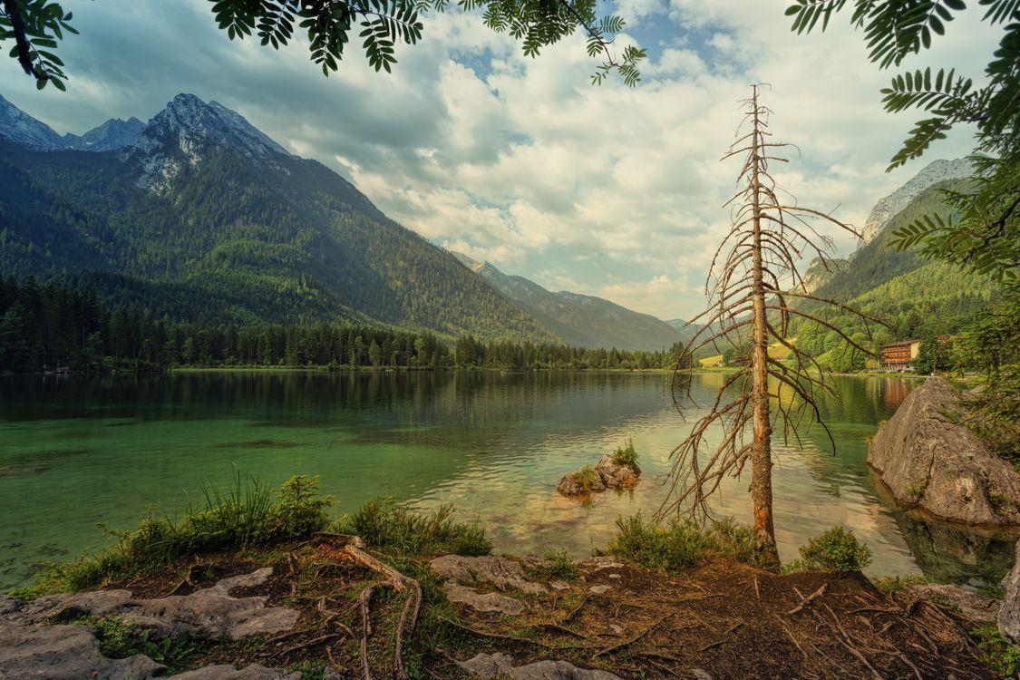 Фото Hintersee озеро старое дерево - бесплатные картинки на Fonwall