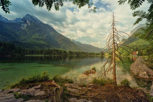 Бесплатные фото Hintersee,озеро,старое дерево,мертвое дерево,стебель,ветки,облака,сельская местность,отражение,Bavaria,горы,скалы