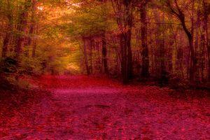 Заставки осень, красная листва, лес
