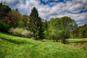 Фото бесплатно поле, деревья, тропинка, трава, лес, природа, пейзаж