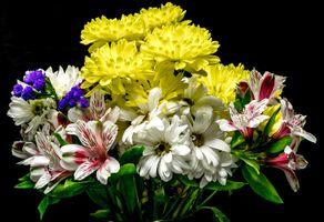 Фото бесплатно цветы, хризантемы, цветение