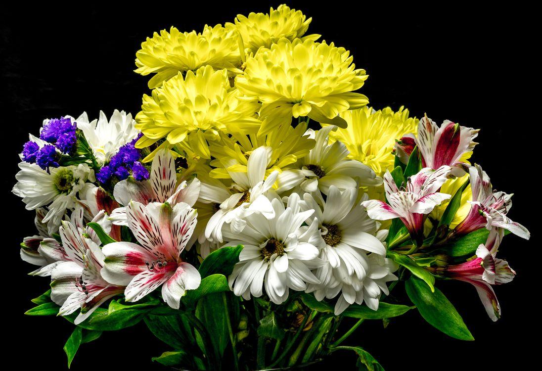 Фото бесплатно цветы, букет, цветок, цветочный, цветение, цветочная композиция, флора, хризантемы, цветы