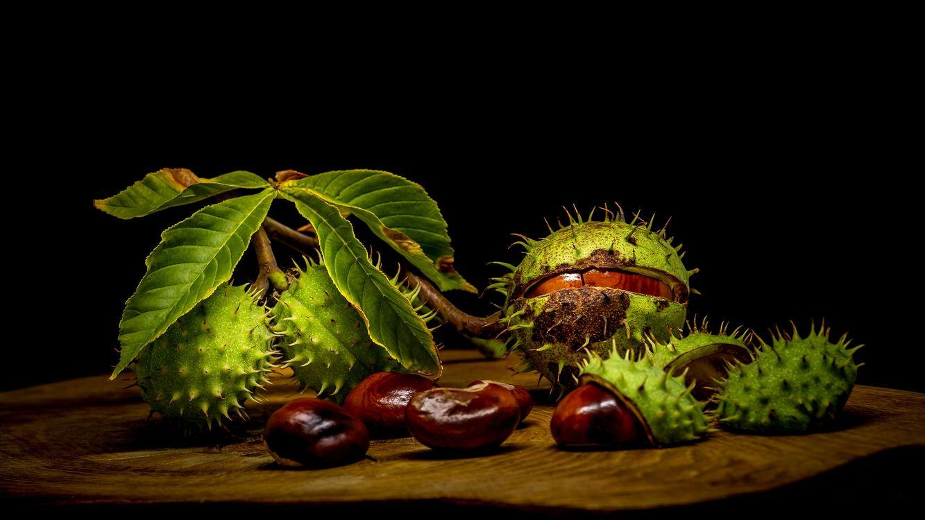 Фото бесплатно каштан, плоды, ветка - на рабочий стол