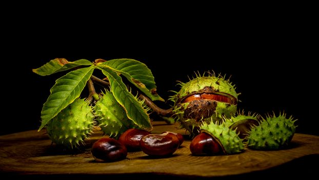 Фото бесплатно каштан, плоды, ветка
