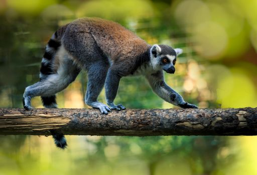 Photo free Lemur on a branch, mammal, animal