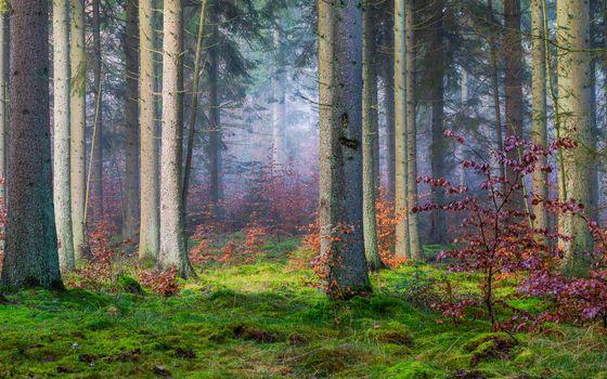 Красивые фотографии на тему лес, деревья, туман