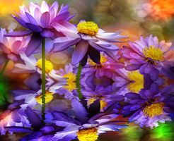 Фото бесплатно цветочная композиция, панорама, лотос