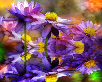 Photo free floral arrangement, panorama, lotus
