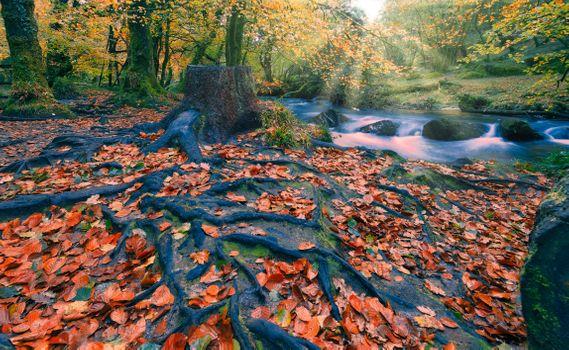 Бесплатные фото осень,речка,деревья,солнечные лучи,корни деревьев,осенние листья,природа,краски осени,пейзаж
