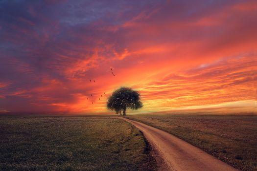 Фото бесплатно Стая птиц, поле, дерево