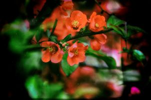Фото бесплатно цветущие ветви, листья, весна