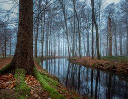 Заставки деревья, туман, река