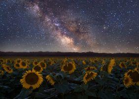 Млечный путь и подсолнухи · бесплатное фото
