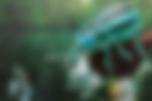 Бесплатные фото впечатляющий долгоносик,24 мм,Eupholus cuvieri,Curculionidae,жук