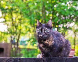 Фото бесплатно кошка, котенок, темный