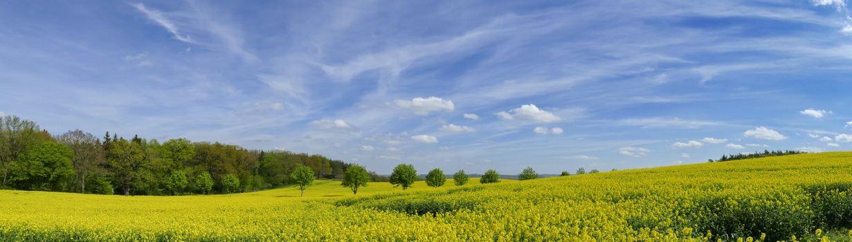 Фото бесплатно цветочное поле, деревья, голубое небо