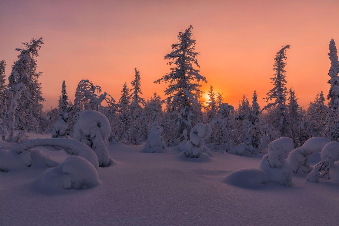 Фото бесплатно снег, зима тундра, лесотундра - на рабочий стол