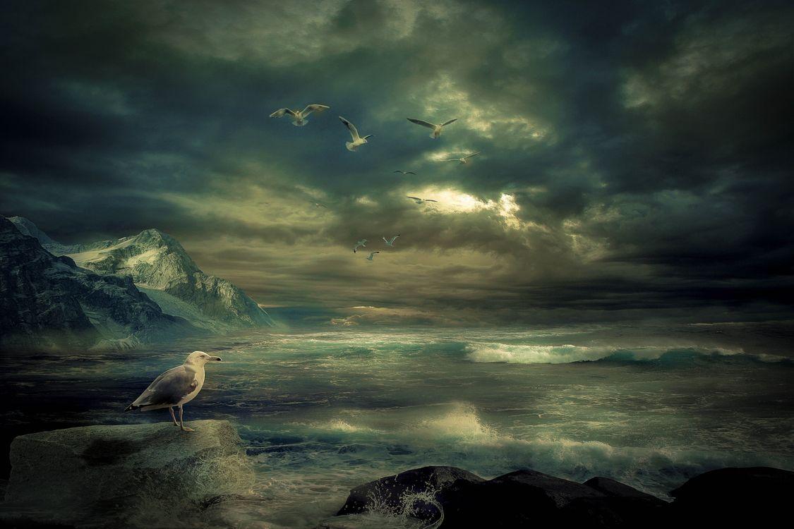 Фото бесплатно море, волны, скалы, горы, тучи, шторм, птицы, чайки, пейзаж, пейзажи