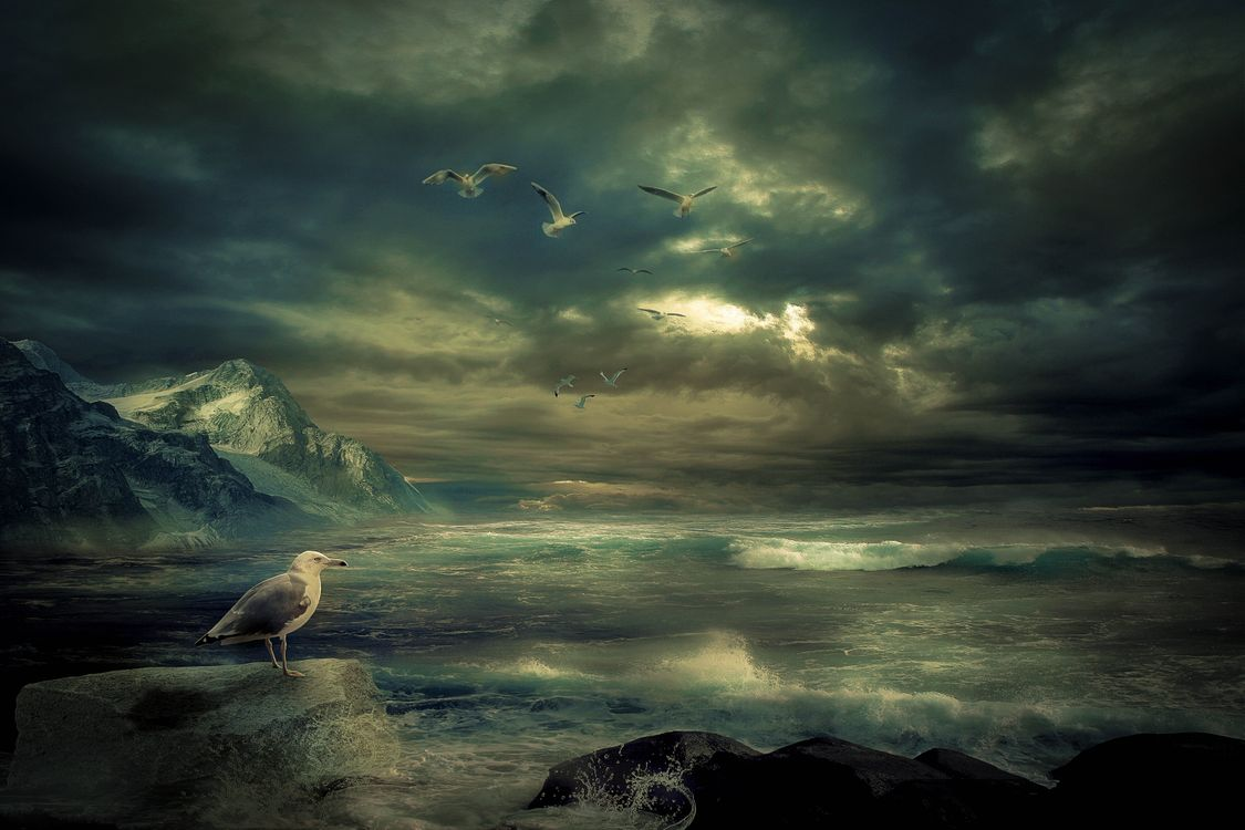 Обои море, волны, скалы, горы, тучи, шторм, птицы, чайки, пейзаж на телефон | картинки пейзажи