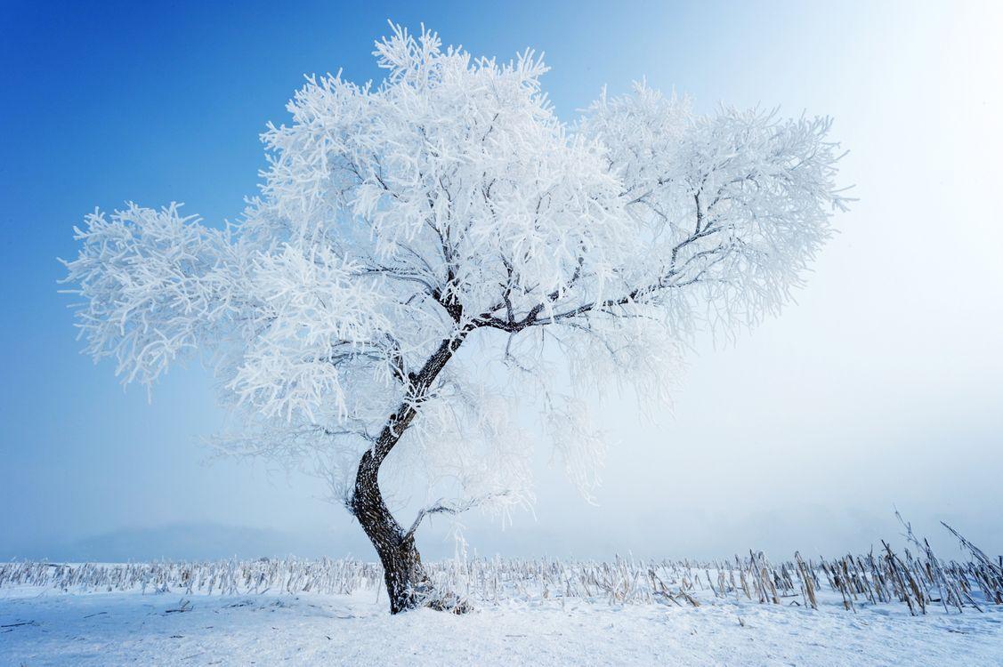 Обои зимнее дерево, ветви, иней картинки на телефон