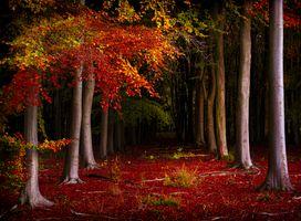 Фото бесплатно осенние краски, осенние листья, лес