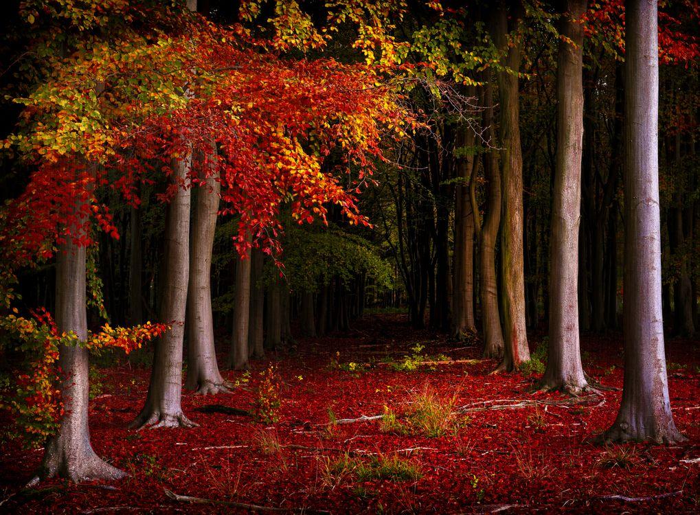 Обои осенние краски, осенние листья, лес картинки на телефон