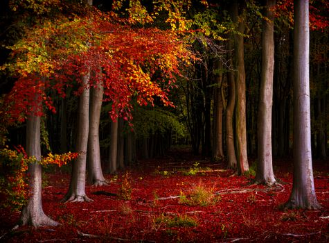 Photo free autumn colors, autumn leaves, forest