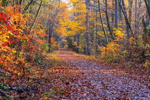 Бесплатные фото осень,лес,деревья,парк,дорога,природа,пейзаж