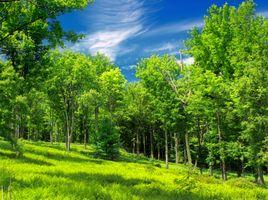Фото бесплатно поляна, лес, поле