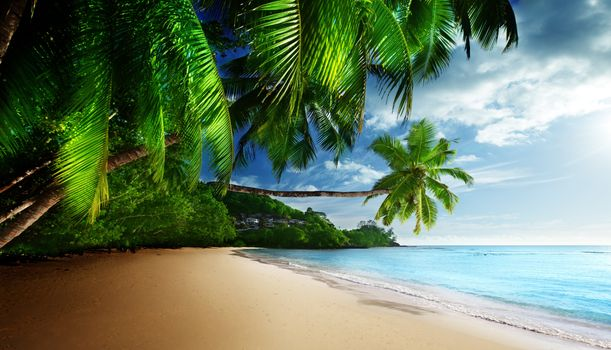 Sand beach with palm trees · free photo