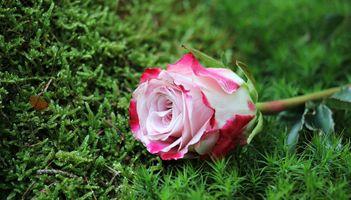 Фото бесплатно цветы, мох, букет