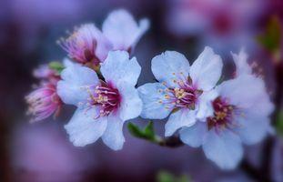 Заставки макро, весна, цветущие ветви