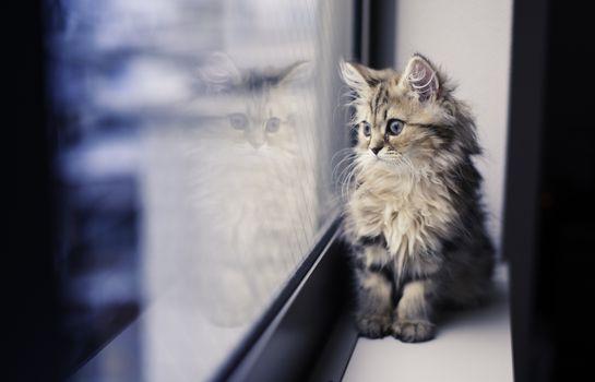 Фото бесплатно кошка, котенок, настроение, отражение, окно