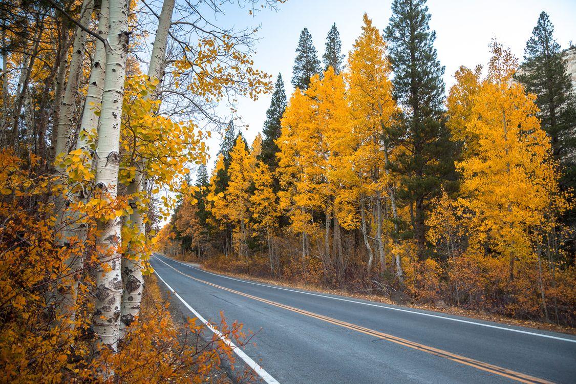 Фото бесплатно березки, лес, осень - на рабочий стол