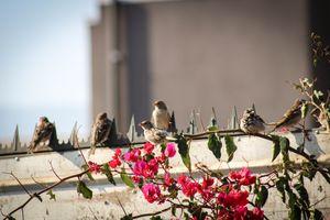 Заставки птица, природа, цветок