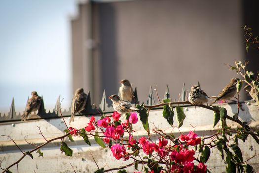 Бесплатные фото птица,природа,цветок,свобода,птицы,пейзаж,весна,растение,филиал,дерево,окно,голубей и голубей