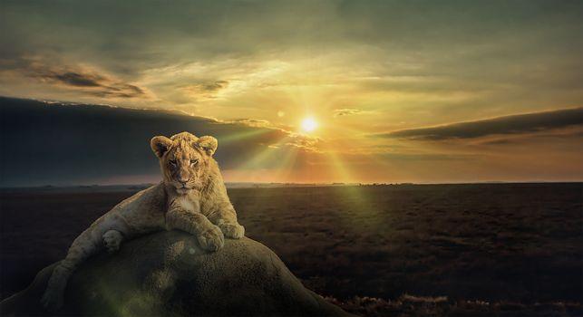Фото бесплатно закат солнца, поле, камень