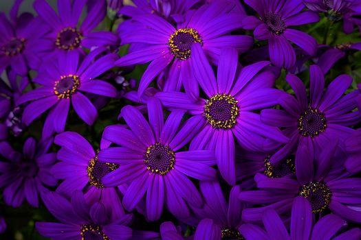 Фото бесплатно chrysanthemum, цветы, букет