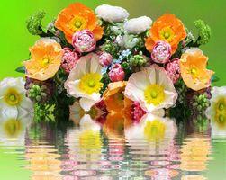 Заставки цветок, красивый букет, праздничный букет
