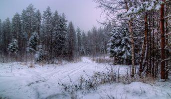 Заставки Норвегия, зима, лес