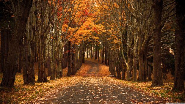 Заставки осень, красота, лес