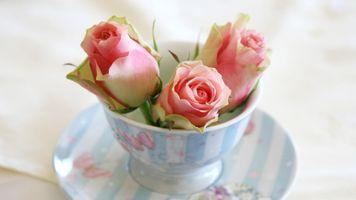 Фото бесплатно cvety, чашка, rozy