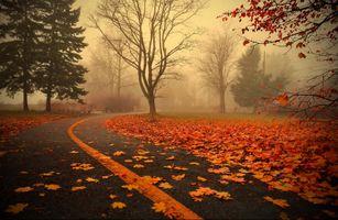 Бесплатные фото парк,дорога,осень,осенняя листва,туман,деревья,пейзаж