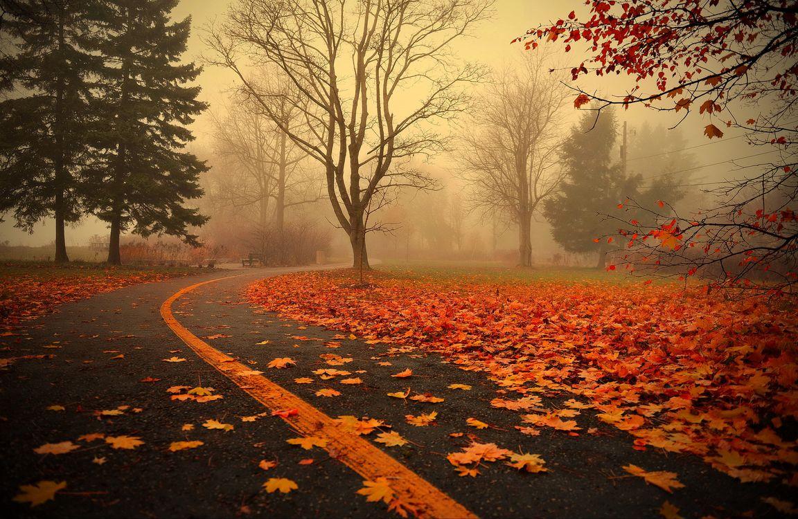 Фото бесплатно парк, дорога, осень, осенняя листва, туман, деревья, пейзаж, пейзажи