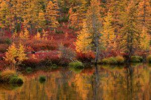 Золотая осень Колымы · бесплатное фото