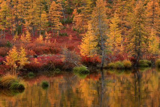 Golden Autumn Kolyma · free photo
